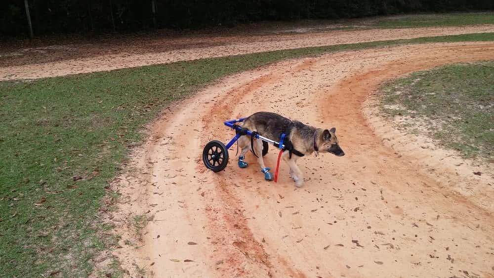best dog wheelchair