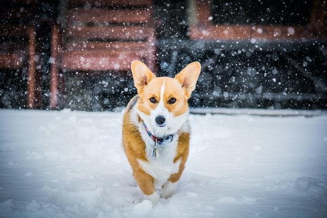 Best Medium Dogs for Seniors