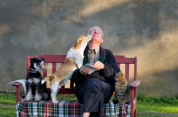 Best Dog Breeds for Seniors: Bring You Joy and Company