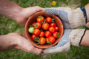 gardening tools for seniors